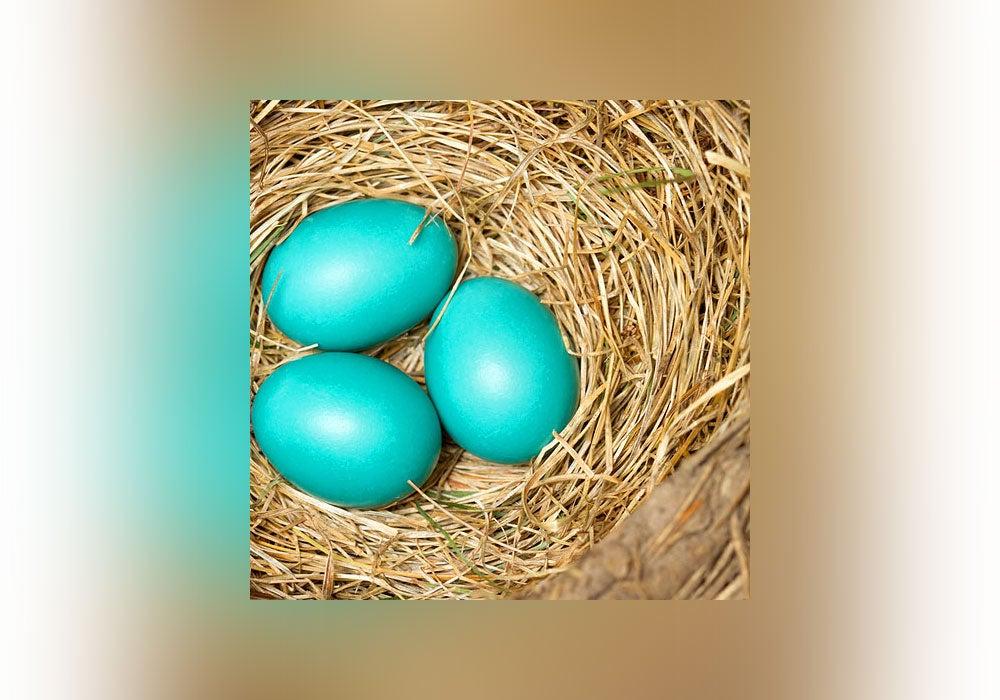 easter egg, turquoise