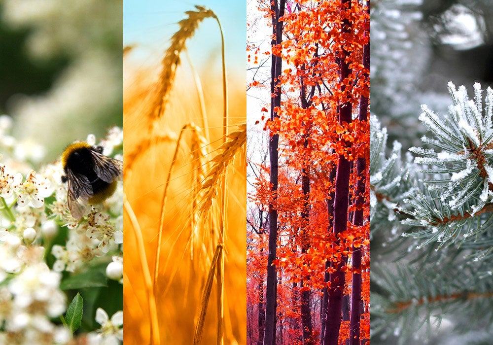 Do You Know When to Capitalize The Seasons? - Everything ...