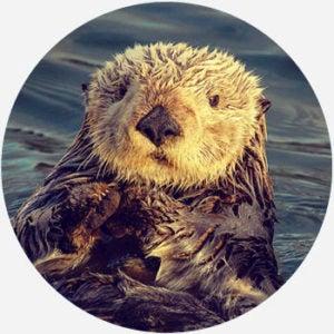 naked otter