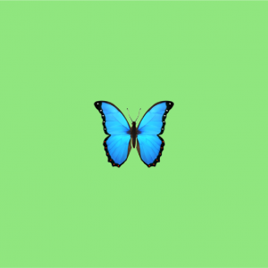 green background with butterfly emoji on it