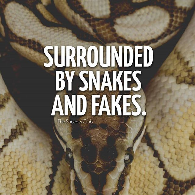 What Does snake Mean? | Slang by Dictionary com