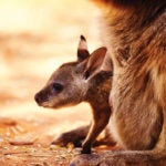 Kangaroo Words: Words That Contain Their Own Synonyms