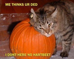 catplanet.org