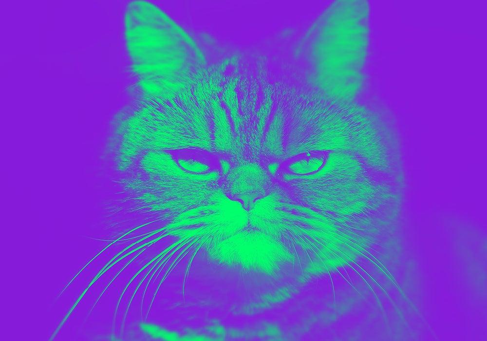 cat tax | Dictionary.com