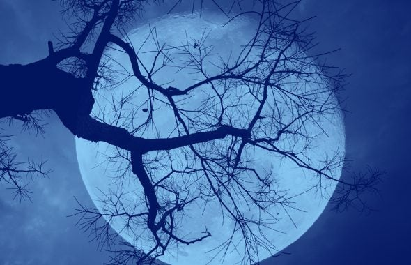 silhouette of branches against a full moon in the background
